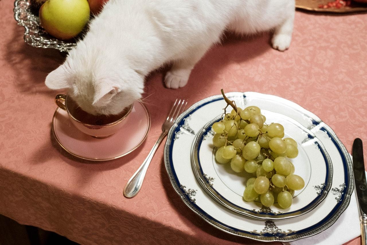 macska_vegán