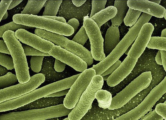 virus_bakterium_fertozes
