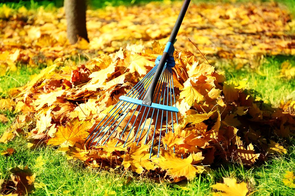szívroham kerti munkák