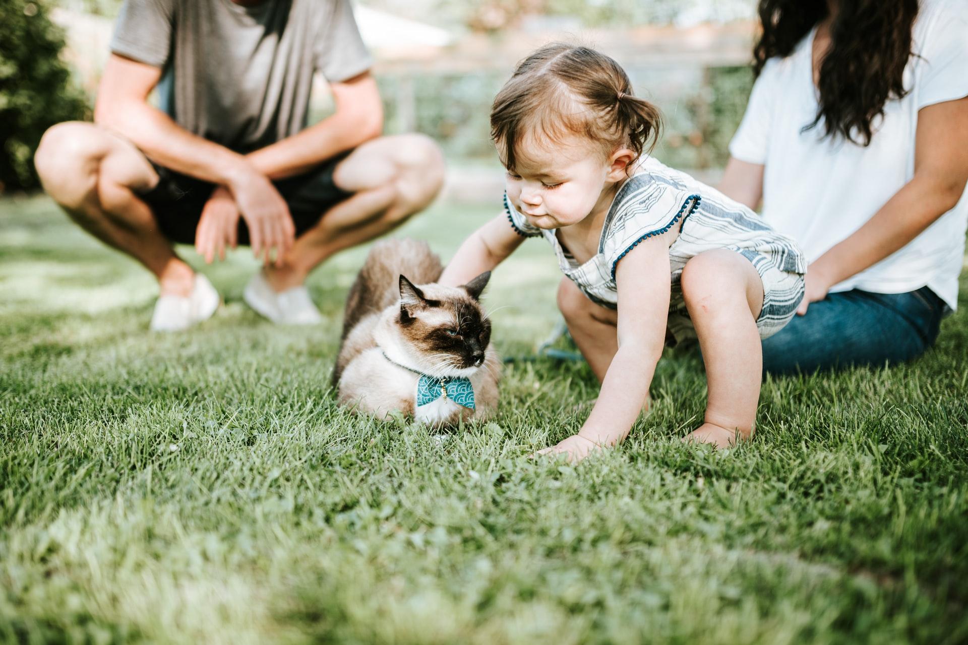 macska gyermek baba